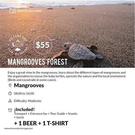 Leon, Nicarágua: Mangrooves Forest