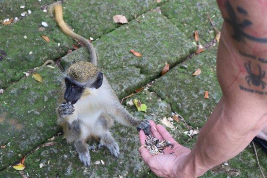 Barbados Wildlife Reserve: photo0.jpg