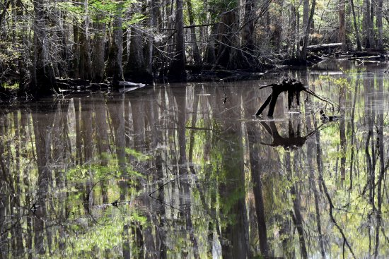 Harleyville, Carolina del Sur: the river in the swamp