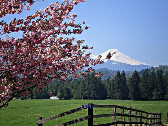 Concrete, WA: Mt. Baker in the spring, road to the cabins