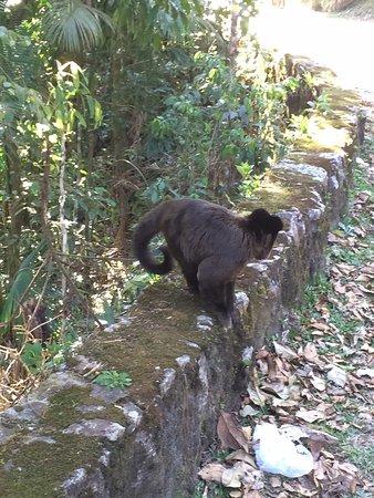 Itatiaia, RJ: animais silvestres