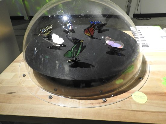 Discovery Center of Idaho: How butterfly wings move