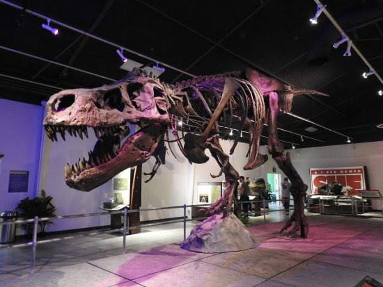 Discovery Center of Idaho: Sue the T-Rex