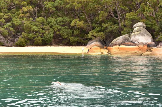 Cowes, Avustralya: Refuge Cove where you can swim or just relax or explore the beautiful beach and surrounding bush