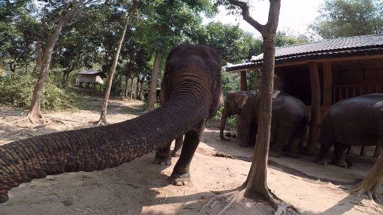 Ban Xieng Lom, Laos: feeding time2
