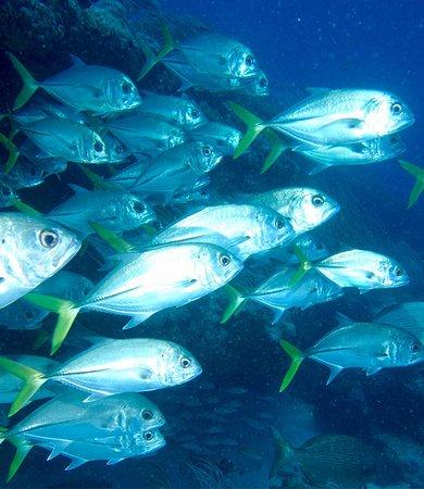 Simpson Bay, St. Maarten-St. Martin: photo8.jpg