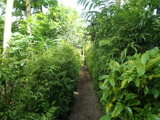 Santo Fire Walk & Cultural Tour: Walk through the garden to the village, very well looked after.