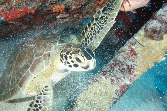 Simpson Bay, St. Maarten-St. Martin: photo0.jpg