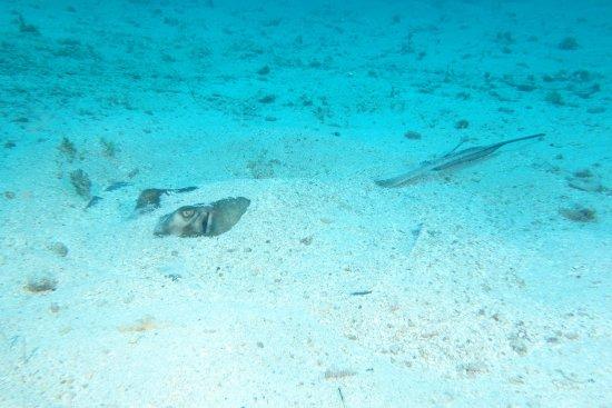 Simpson Bay, St. Maarten-St. Martin: photo1.jpg