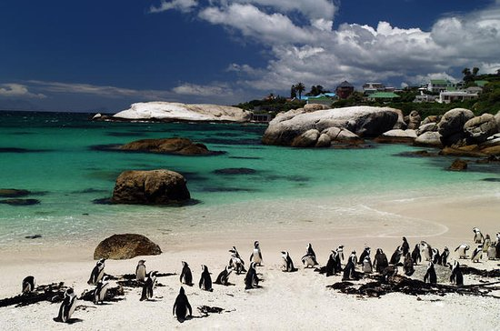 Cape Peninsular Day Tour from Cape...