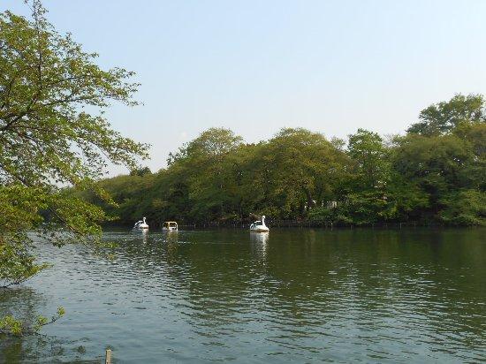 Musashino Foto
