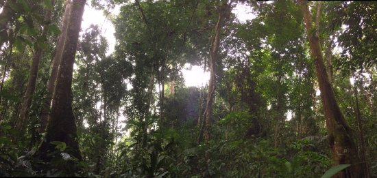 Lupa Masa Rainforest Camp: Surrounding jungle
