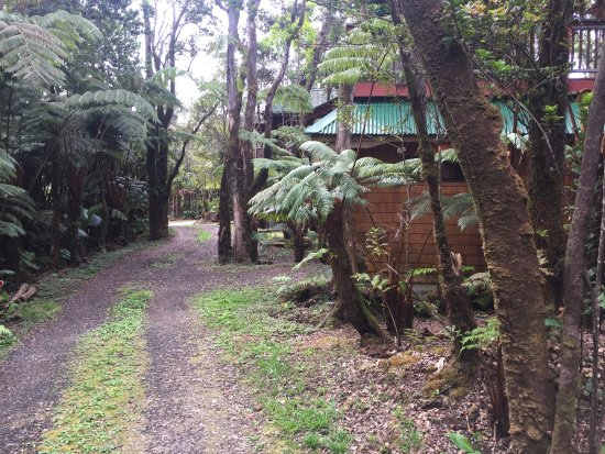 The Guest Cottages at Volcano Acres Tree House: photo1.jpg