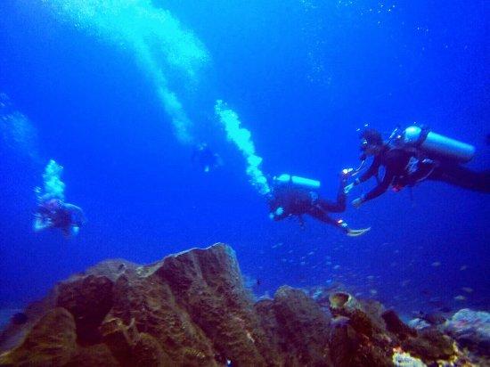 Aqua Cat Bali Dive