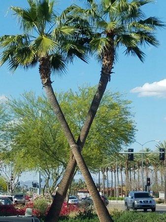 Peoria, Аризона: 20170325_160027_large.jpg