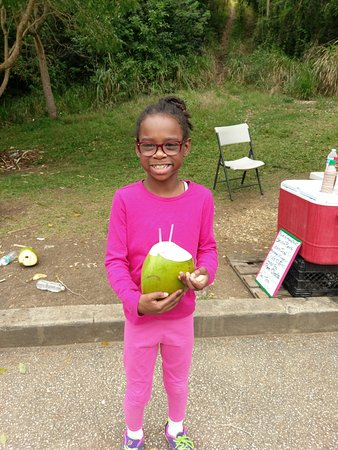 Saint Andrew Parish, باربادوس: Coconut Water