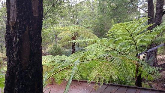 Pemberton, Australia: Surrounded by nature