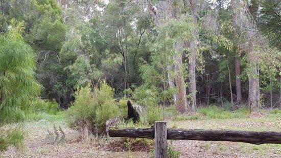 Pemberton, Australia: Nature at its best