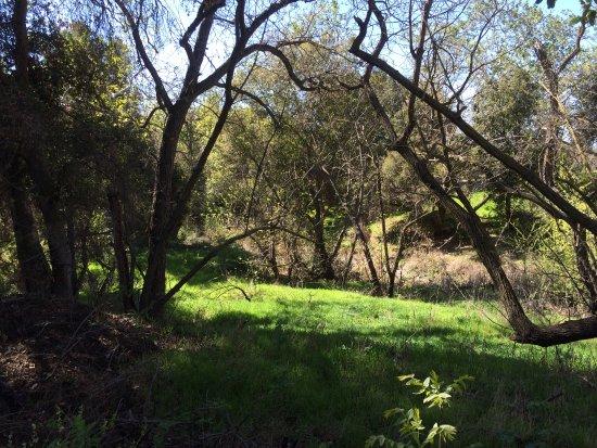 Coyote Creek Parkway Path