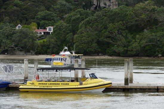 Whitianga, نيوزيلندا: photo0.jpg