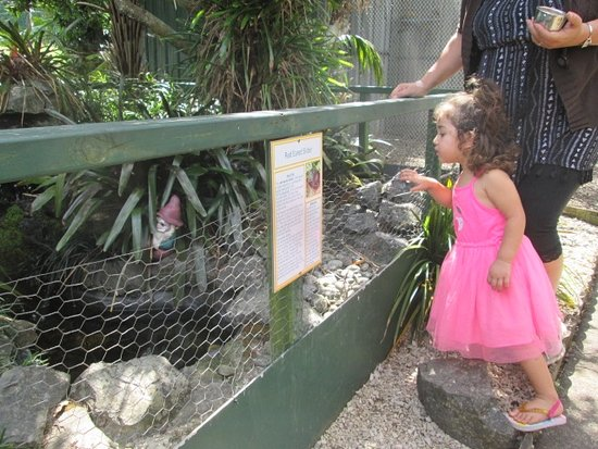 Kerikeri, New Zealand: Little Maia preferred the turtles...