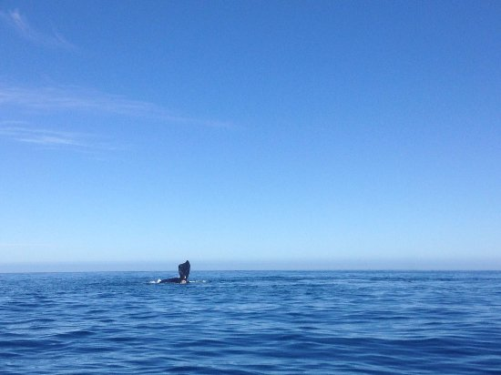Cape Town, Sudáfrica: Spotting whales