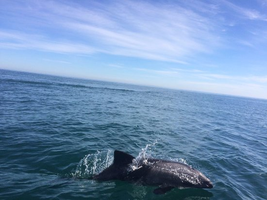 Cape Town, Sudáfrica: Dolphins!