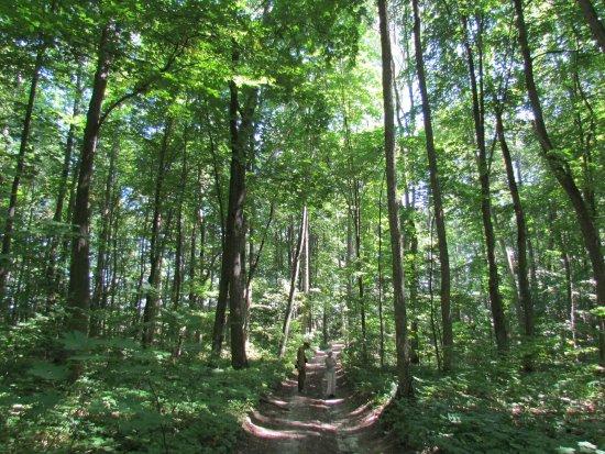 экологическая тропа грабовым лесом
