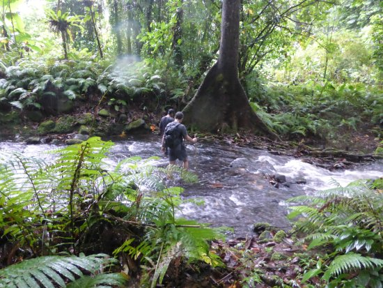 Kosrae, Mikronesiens Forenede Stater: Wading the river on the jungle tour