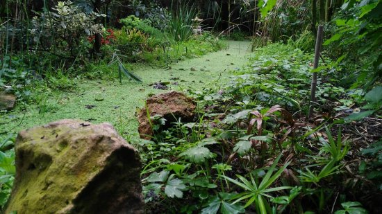 Fb img 1490786815978 picture of jardin for Jardin botanico el ejido