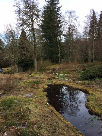 Aviemore, UK: The gardens