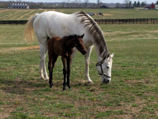 Nicholasville, KY: mother and foal