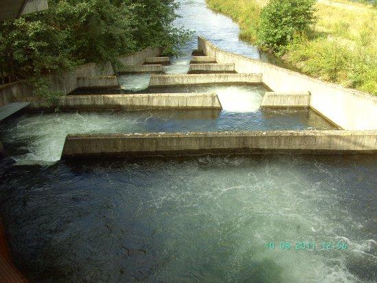 Norsk Villakssenter: Lachstreppen an der Aussenanlage - alles zu besichtigen......