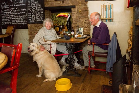 Dog Friendly B And B Forest Of Dean