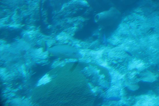 George Town, Grand Cayman: 150 foot down