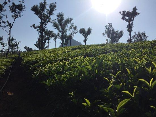 Coonoor, Hindistan: photo3.jpg