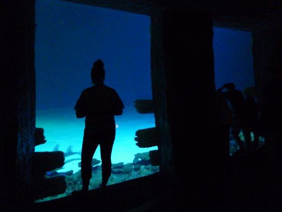 Photo of Aquarium Shark Reef Aquarium at 3950 Las Vegas Blvd S, Las Vegas, NV 89119, United States