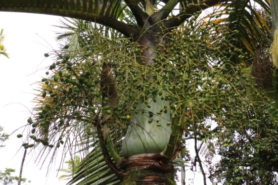 Balata Gardens: One of the plants