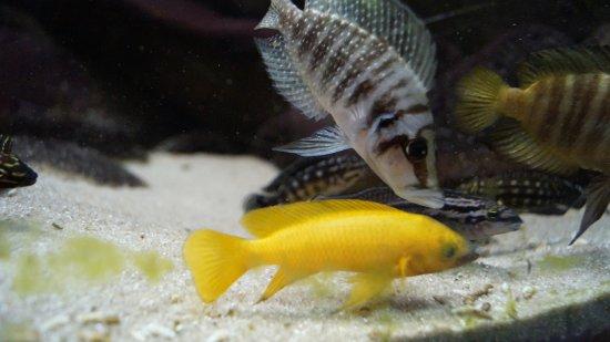 Akwarium Gdynskie MIR: ryby