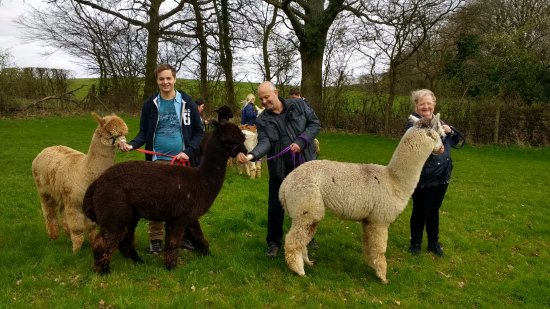 Fletching, UK: The Family with our 3 beautiful Alpaca's