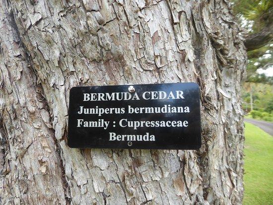 Botanical Gardens: one tagged tree