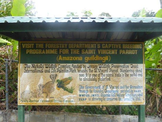 Botanical Gardens: Information on St.Vincent Parrot