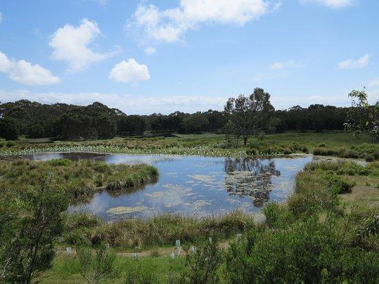 Cowes, ออสเตรเลีย: se podian observar desde ahí wallabys