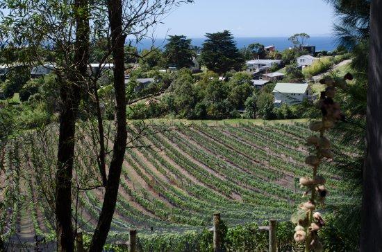 Onetangi, Νέα Ζηλανδία: View from Casita Miro