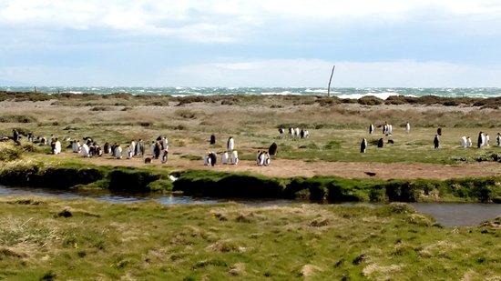 Tierra del Fuego, Chile: Pinguins