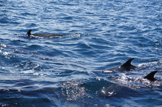 Дрейк-Бэй, Коста-Рика: Delfines moteados