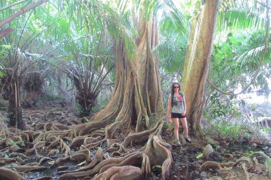 Drake Bay, Costa Rica: Rodeados de vegetación exuberante