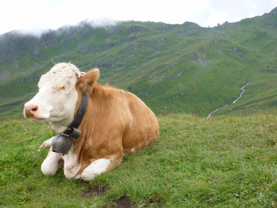 Grindelwald, Schweiz: beautiful scenery