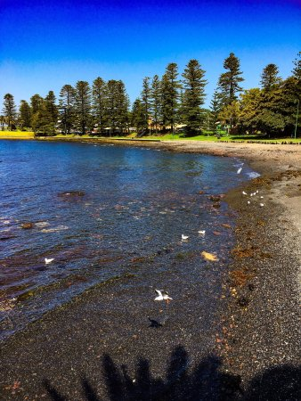 Kiama harbour at low tide with seagulls