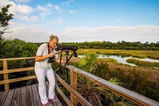 The Lodge on Little St. Simons Island: Bird Watching from a tower on Myrtle Pond